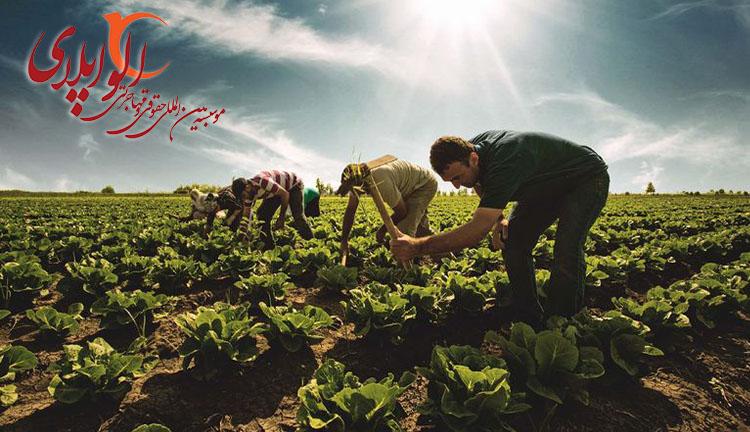 کار کشاورزی در ترکیه