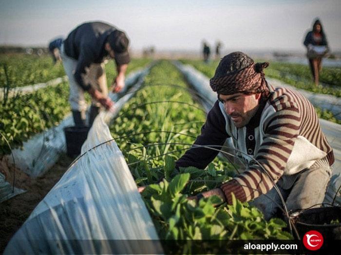 محصولات کشاورزی ترکیه