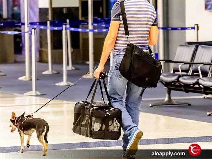 چگونگی بردن حیوان خانگی به ترکیه
